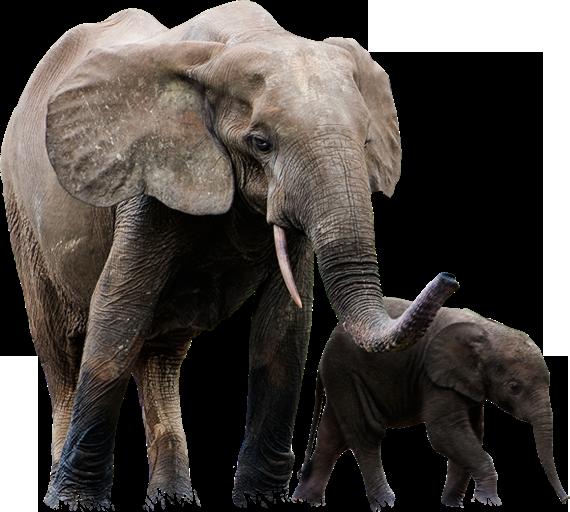 Elephant PNG - 25112
