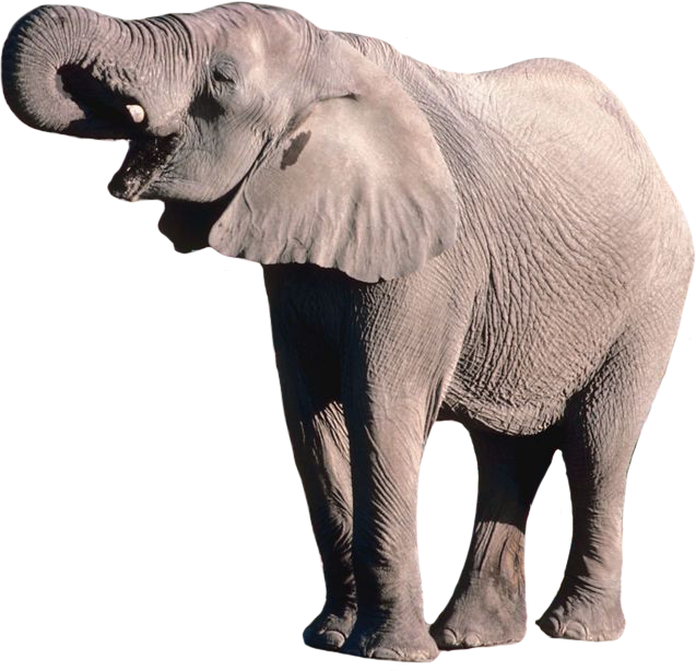 Elephant PNG - 13345