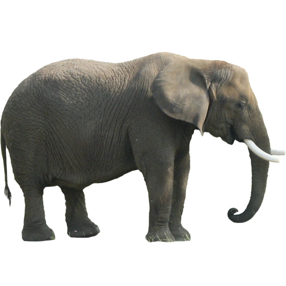 Elephant Png Clipart PNG Image - Elephant PNG