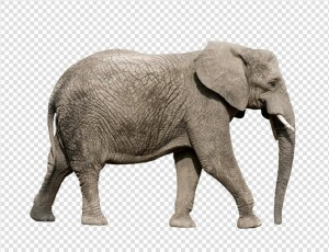 Elephant PNG - 13343