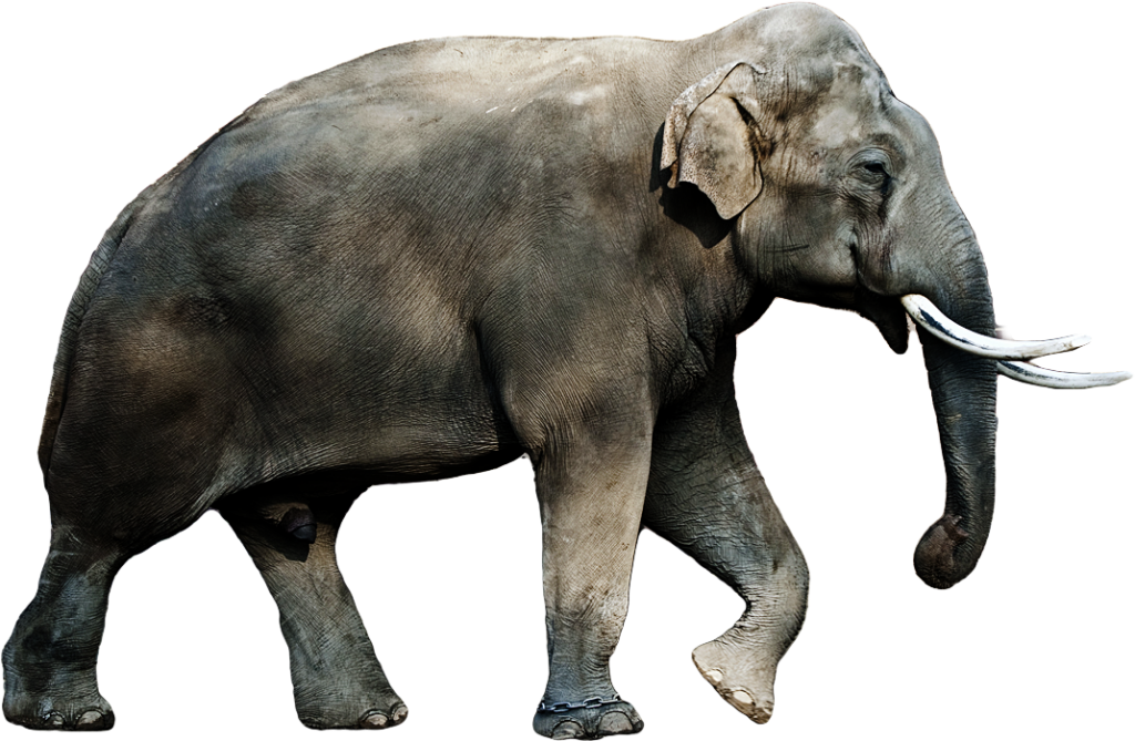 Collection of HQ Elephant PNG. | PlusPNG