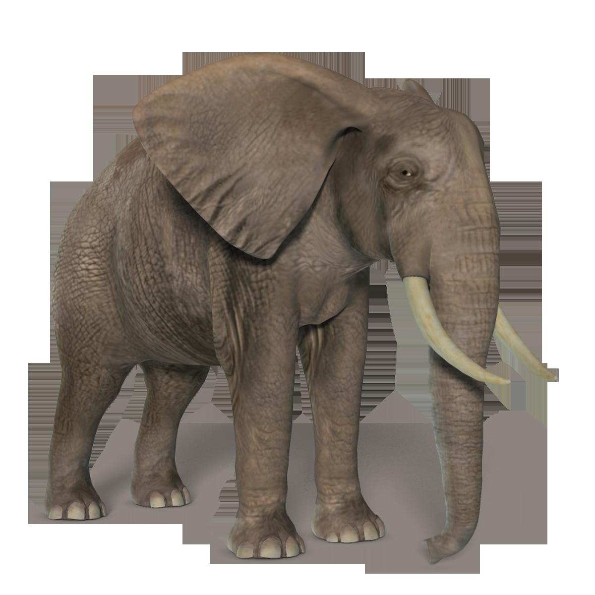 Elephant PNG - 13360