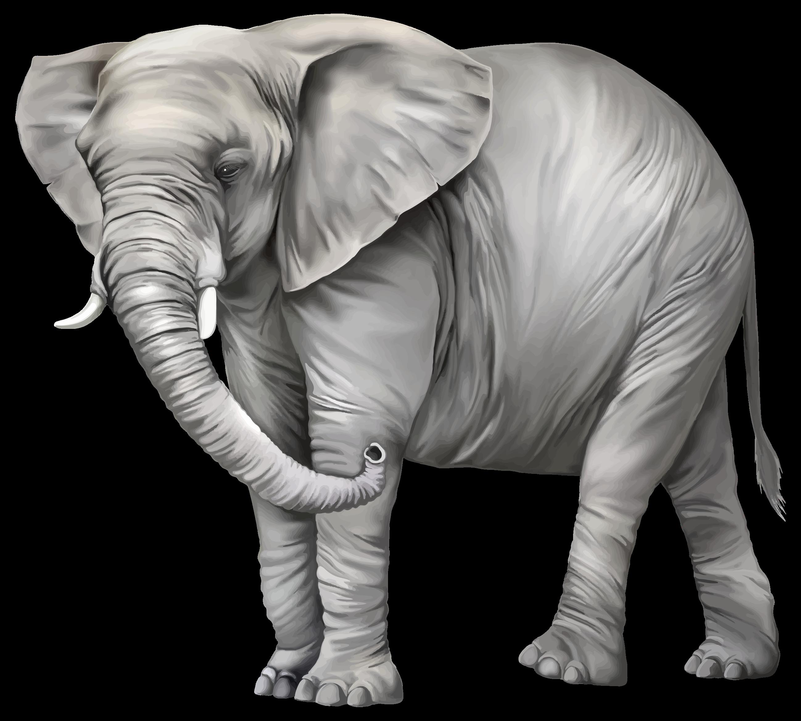 Elephant PNG - 13353