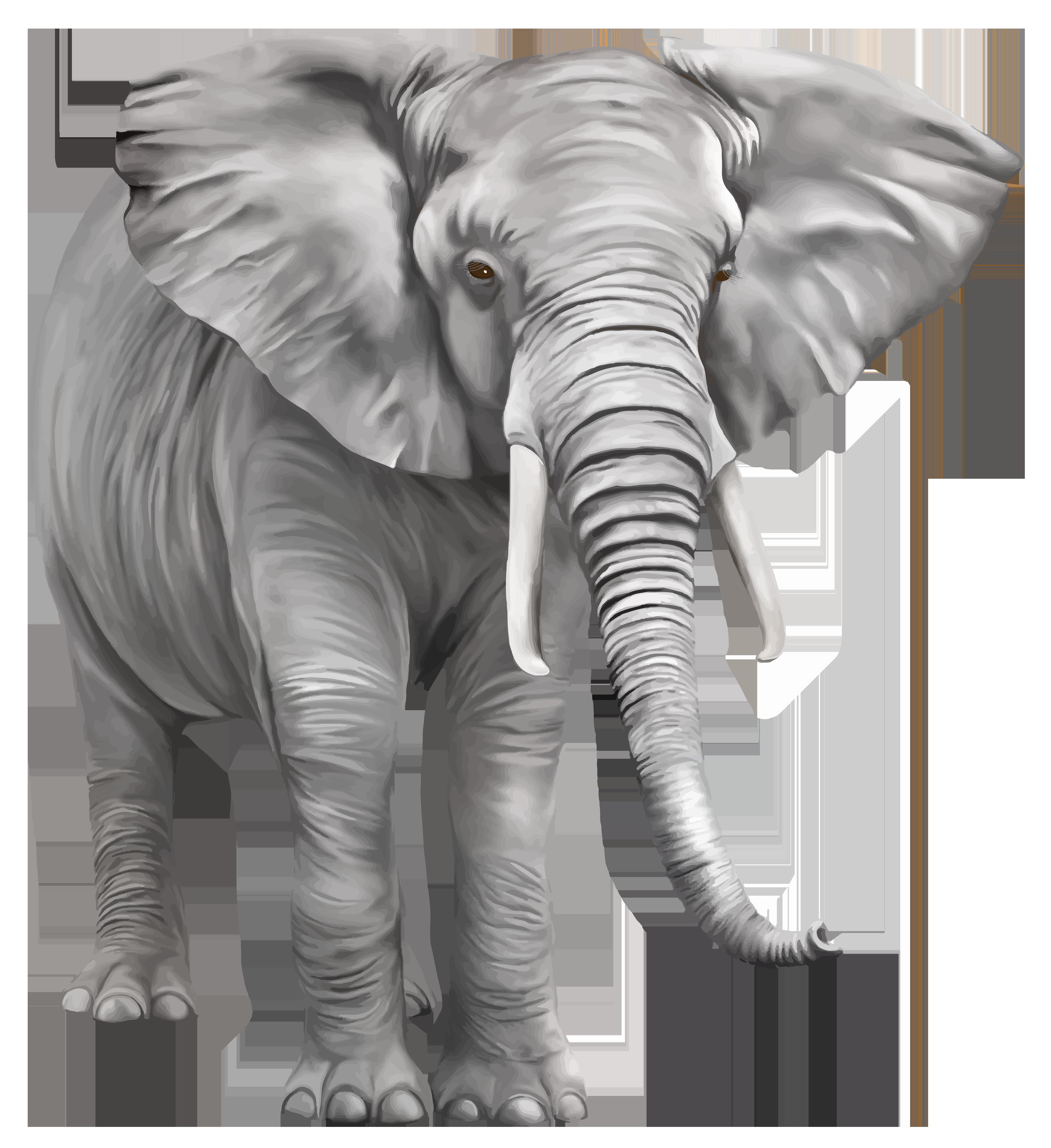 Elephant PNG - 13355