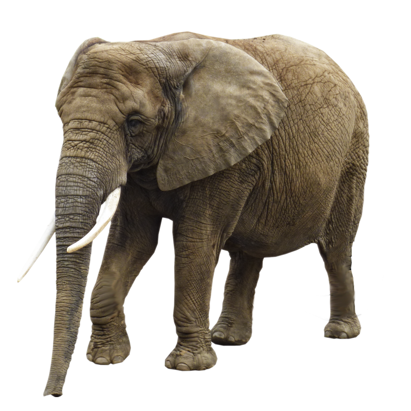 Elephant PNG - 13350