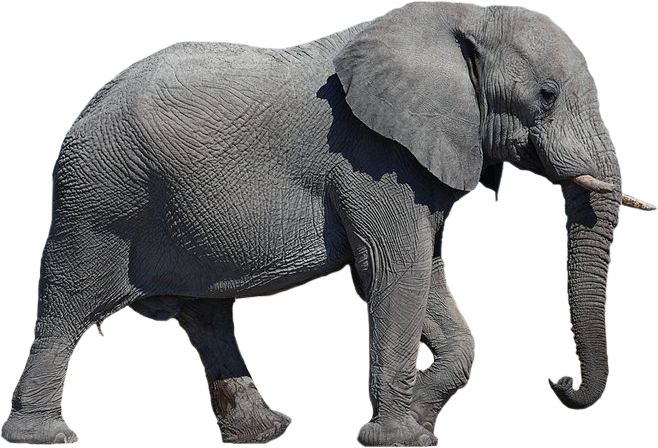 PNG File Name: Elephant Transparent Background - Elephant PNG