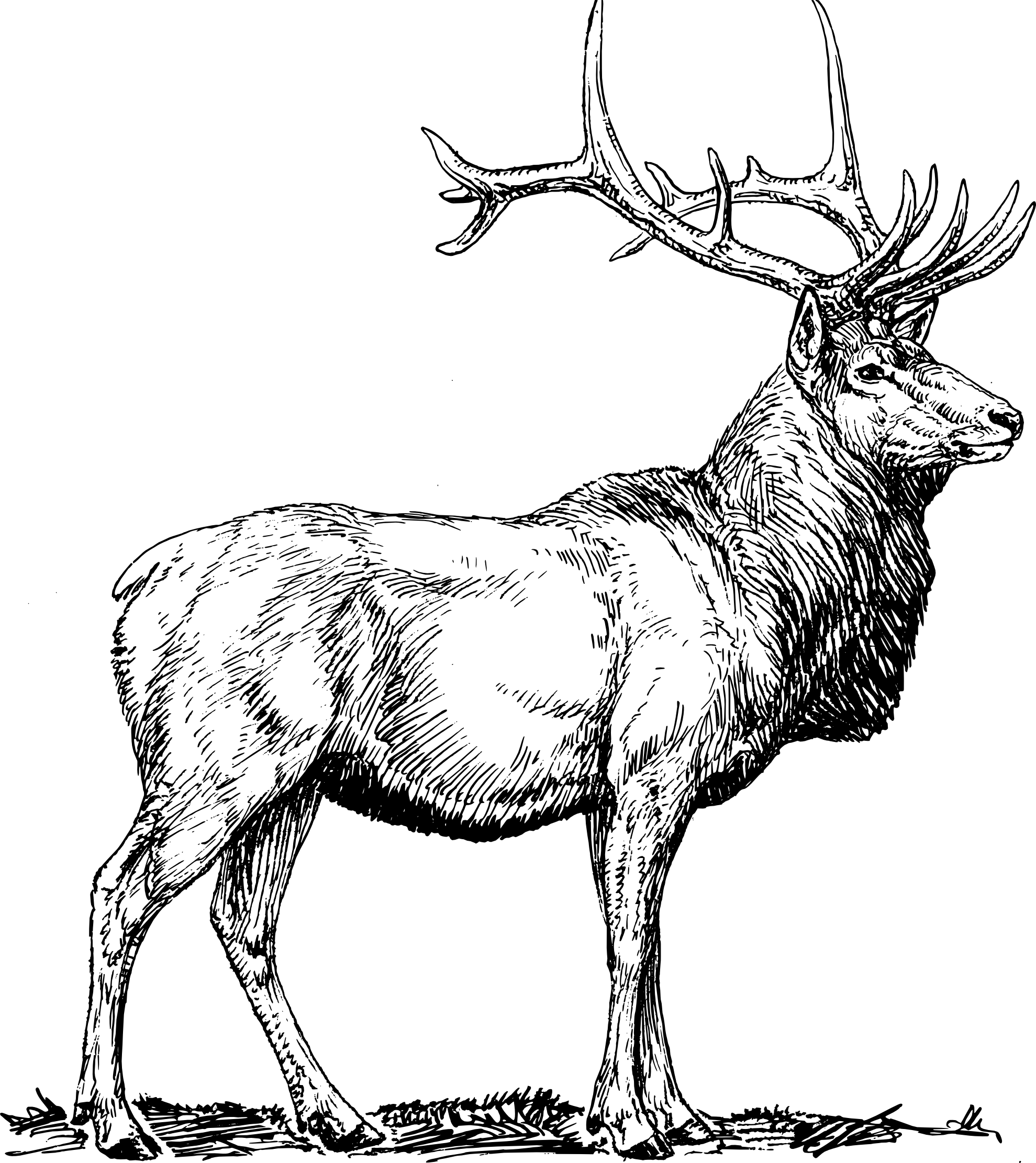Elk Clipart - Elk PNG Black And White