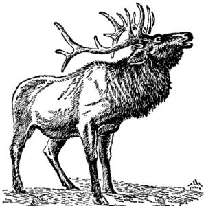 Elk Line Image - Elk PNG Black And White