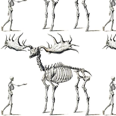 skulls bones skeletons anatomy gothic death vintage monochrome black white  antique humans adults moose deer animals - Elk PNG Black And White