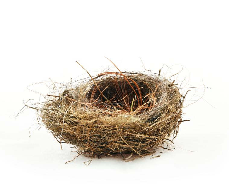 Empty Nest PNG - 78426