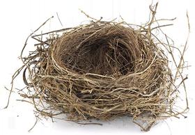 Empty Nest PNG - 78427
