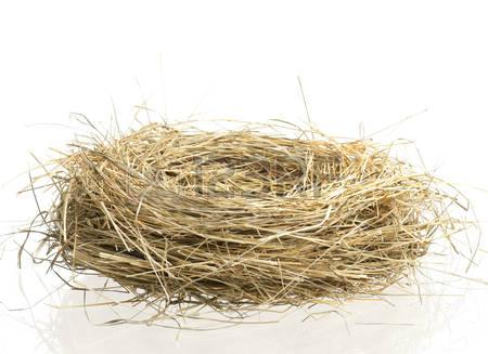 Empty Nest PNG - 78432