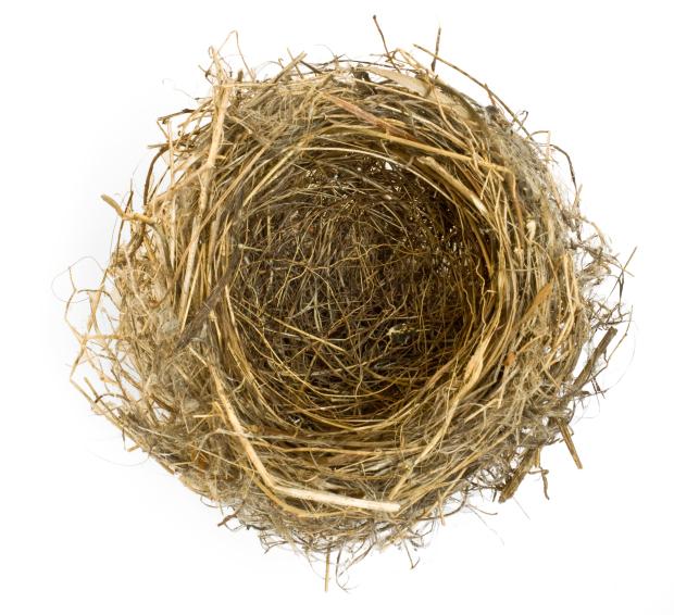 Empty Nest PNG - 78433