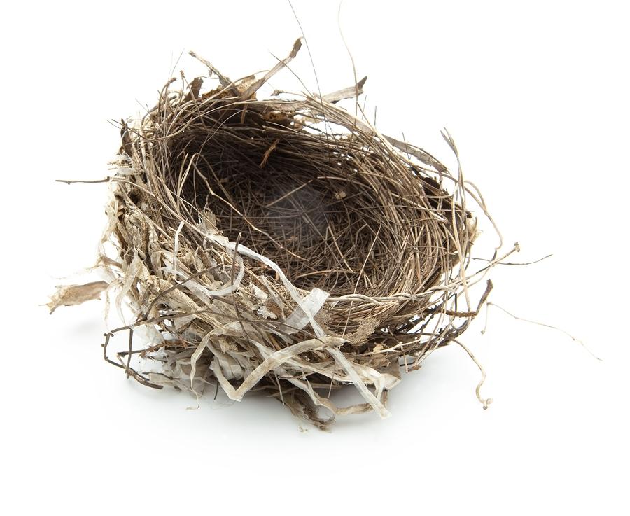 Empty Nest PNG - 78428