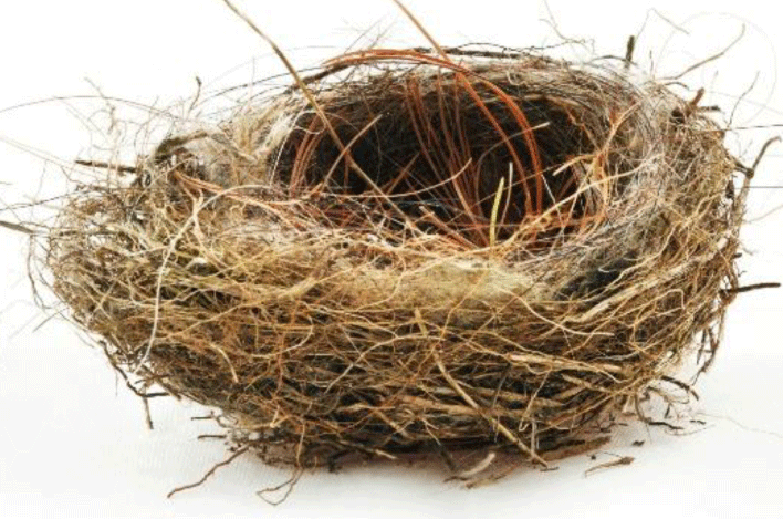 Empty Nest PNG