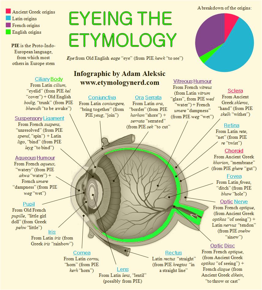 Eyeing the Etymology - Etymology PNG
