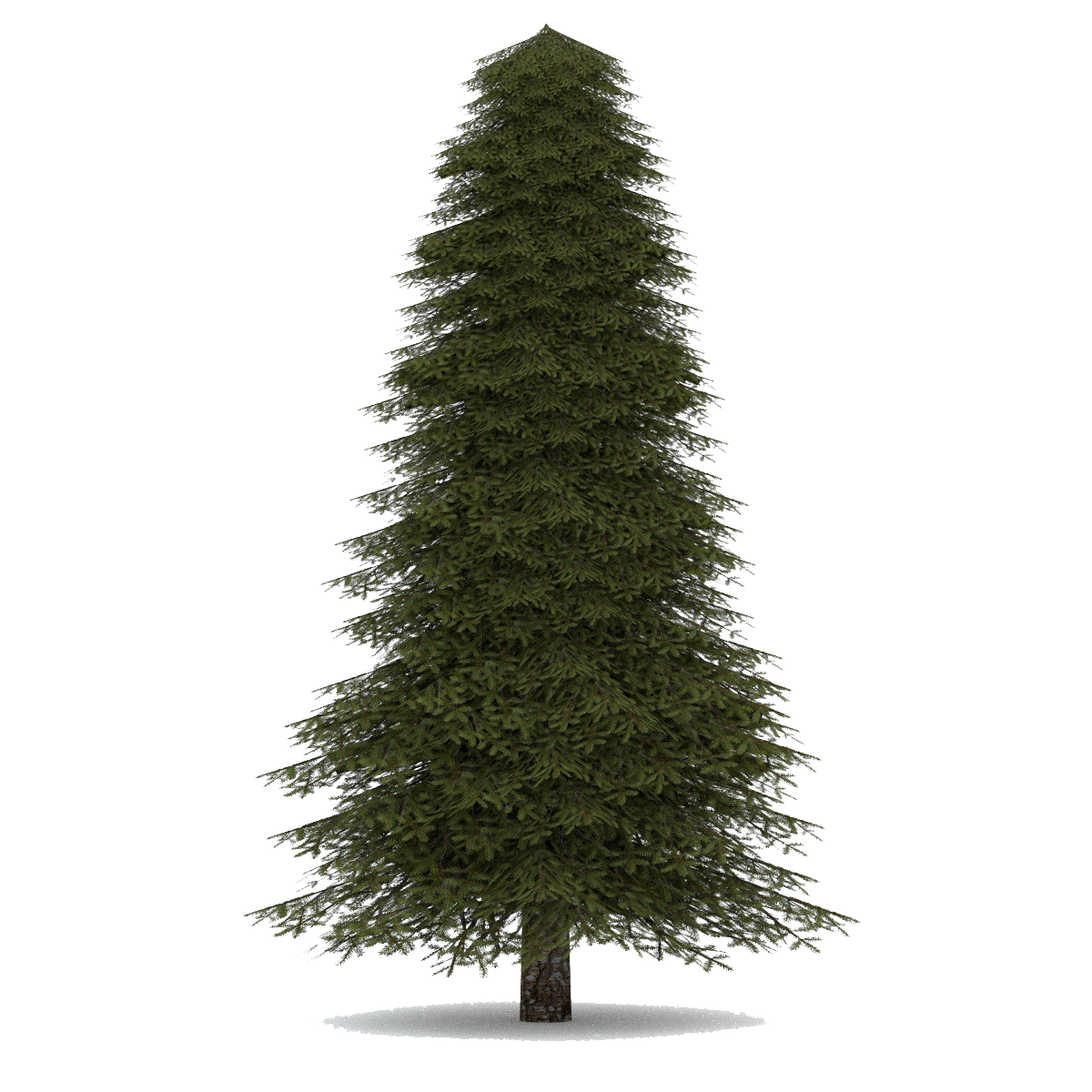 Download Fir-Tree PNG images transparent gallery. Advertisement - Evergreen Tree PNG HD