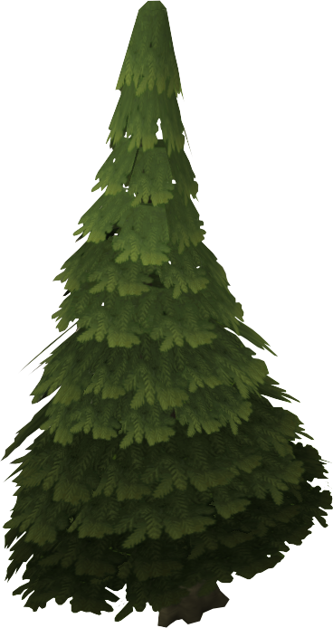 Evergreen tree.png - Evergreen Tree PNG HD