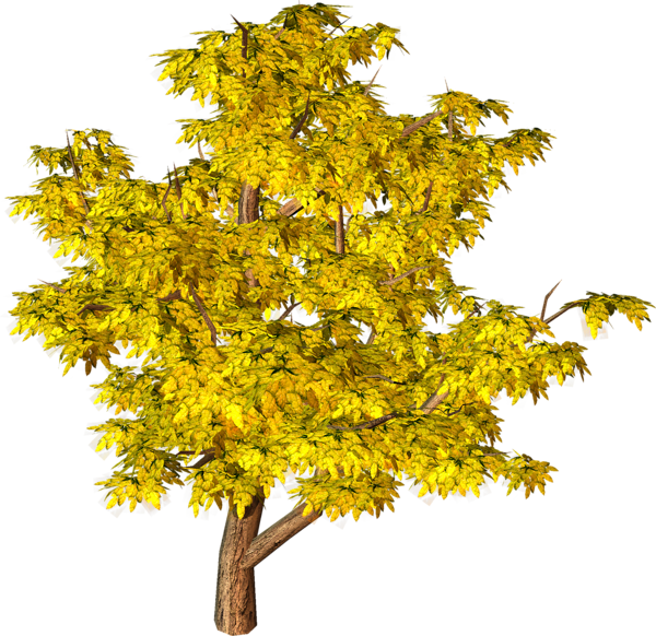 Yellow Fall Tree PNG Clipart - Evergreen Tree PNG HD