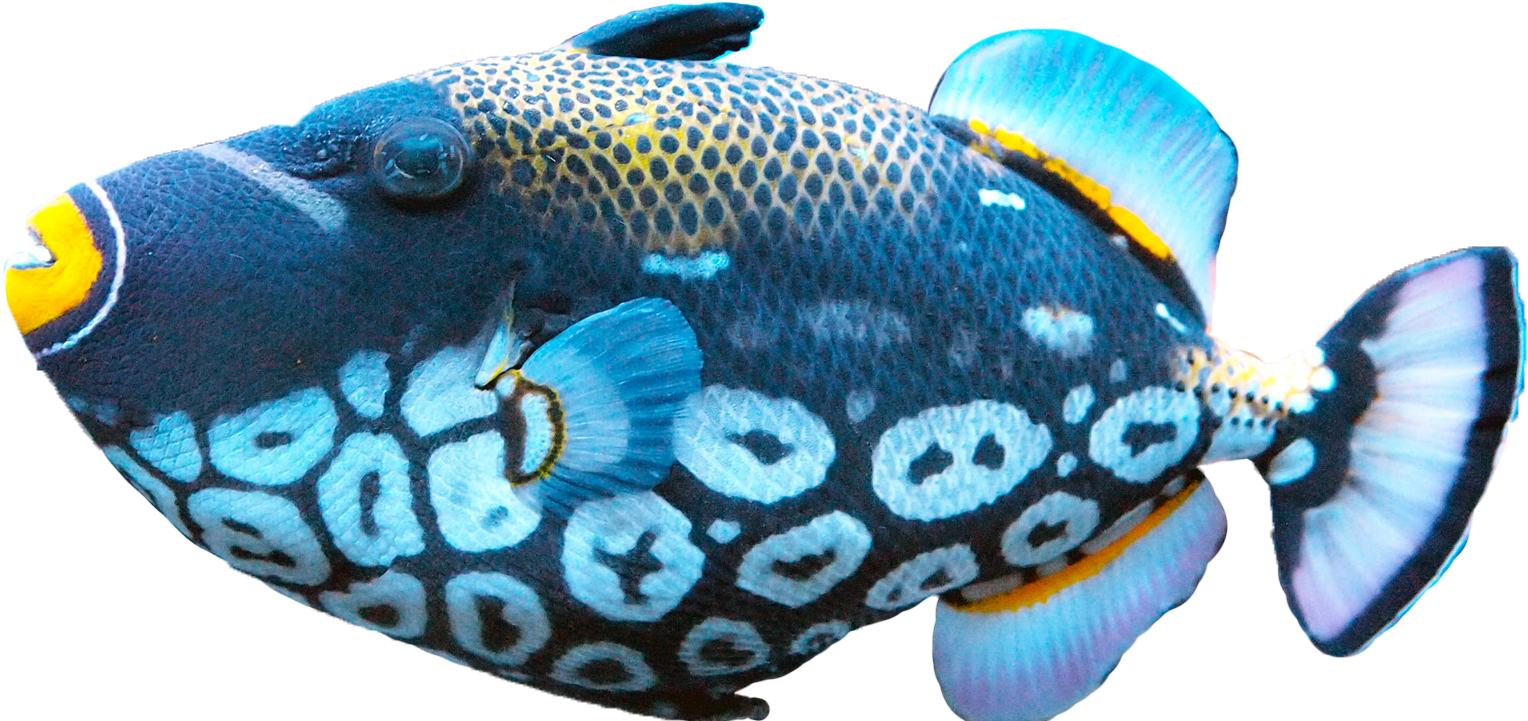 Fish PNG - 5046