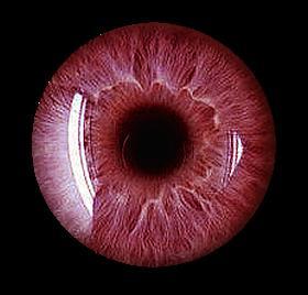 Eyes HD PNG - 117437