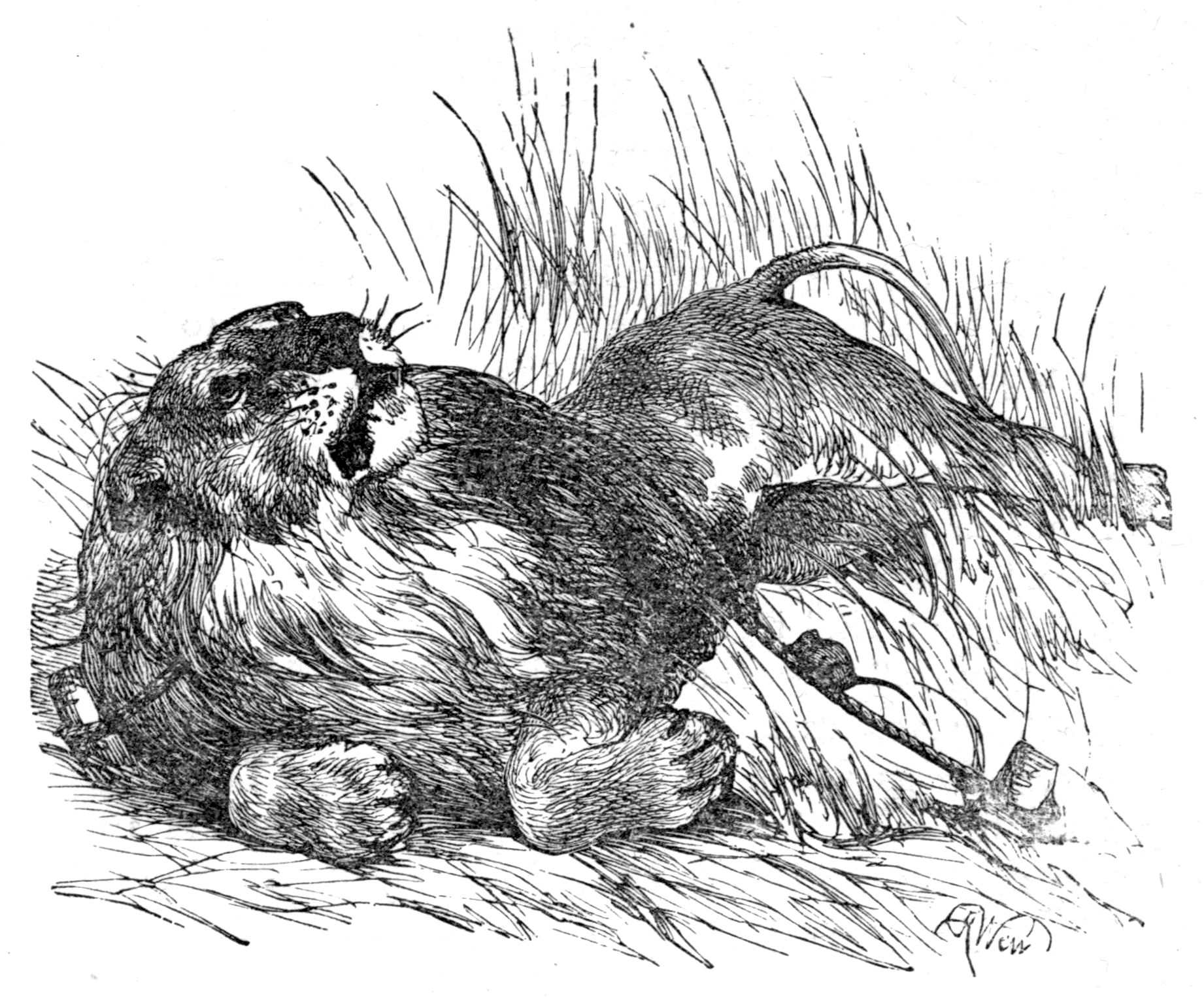 File:Page 31 illustration to Three hundred Aesopu0027s fables (Townshend).png - Fables PNG