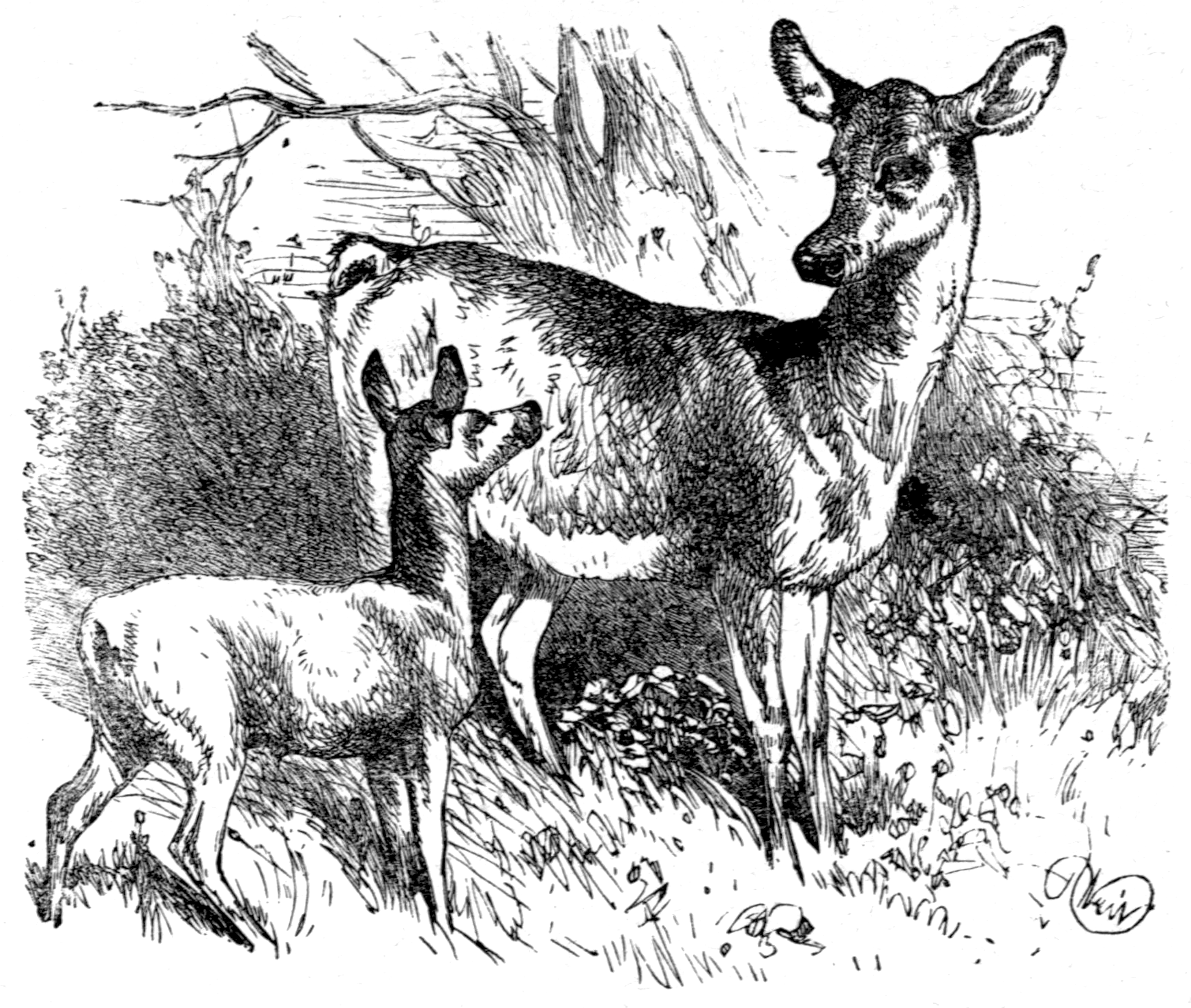 File:Page 41 illustration to Three hundred Aesopu0027s fables (Townsend).png - Fables PNG