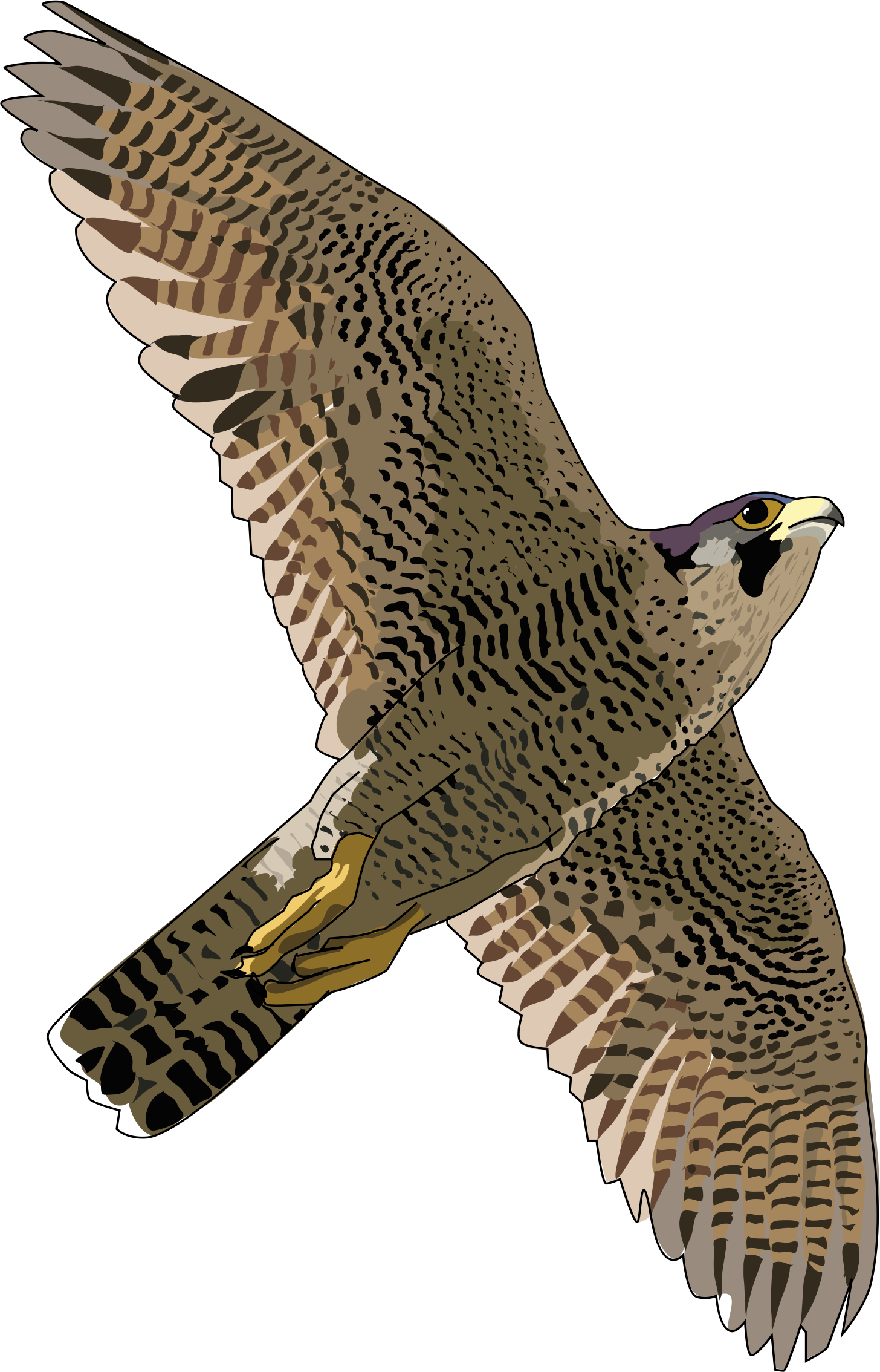 Download PNG image - Falcon Free Download Png - Falcon HD PNG