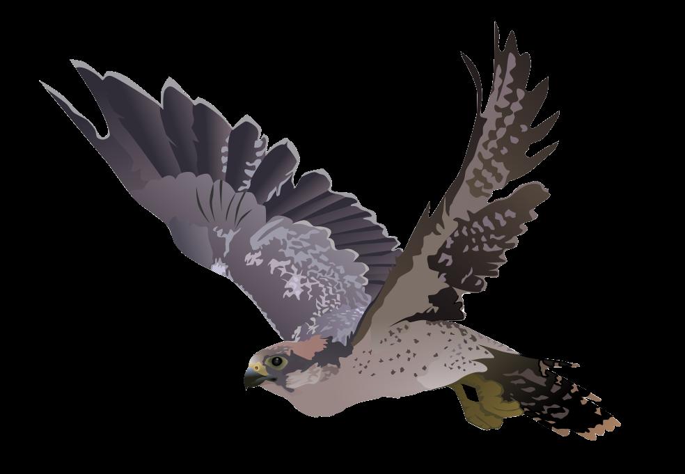 Falcon PNG Transparent Image - Falcon HD PNG