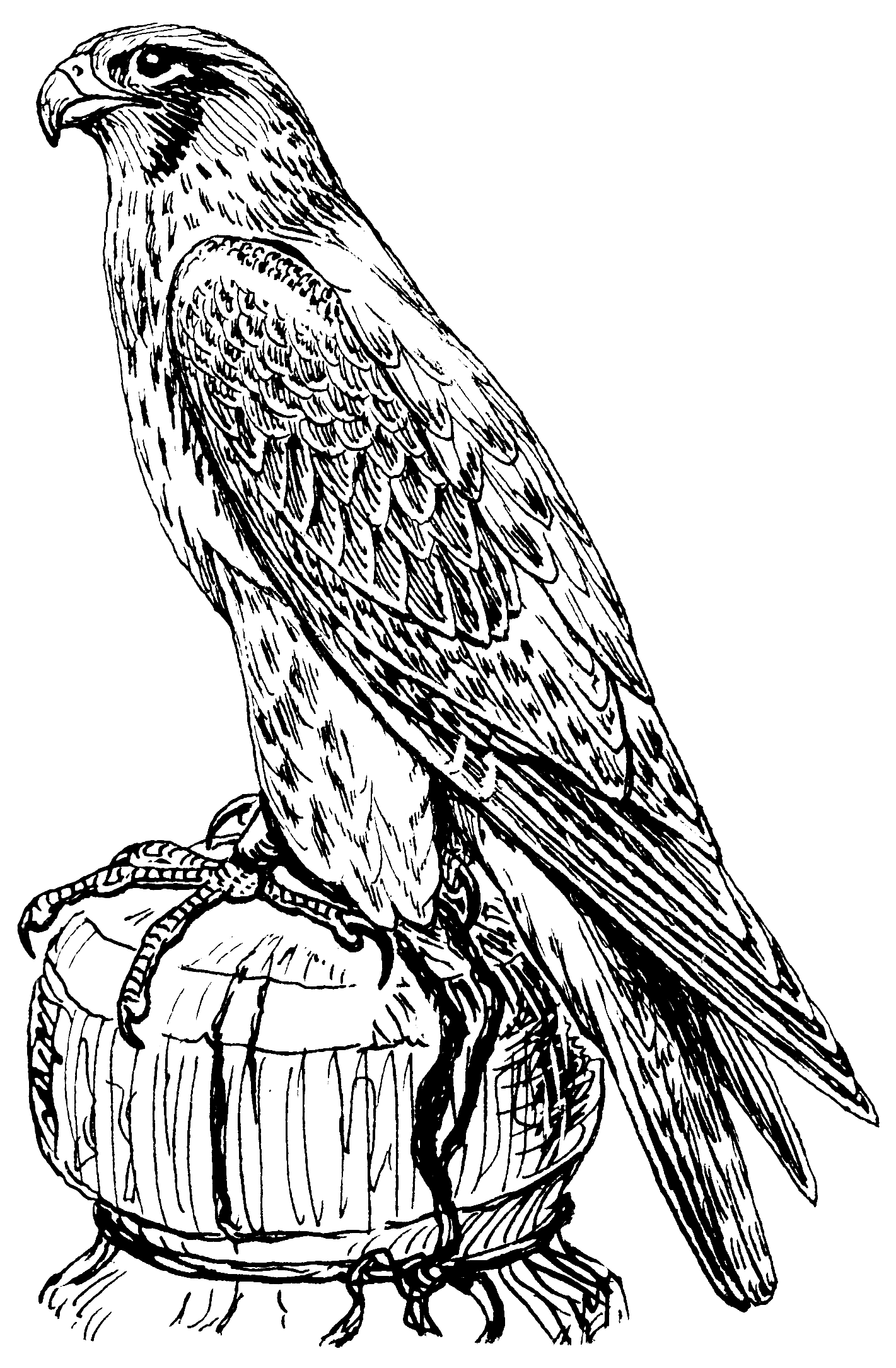 File:Falcon (PSF).png - Falcon HD PNG