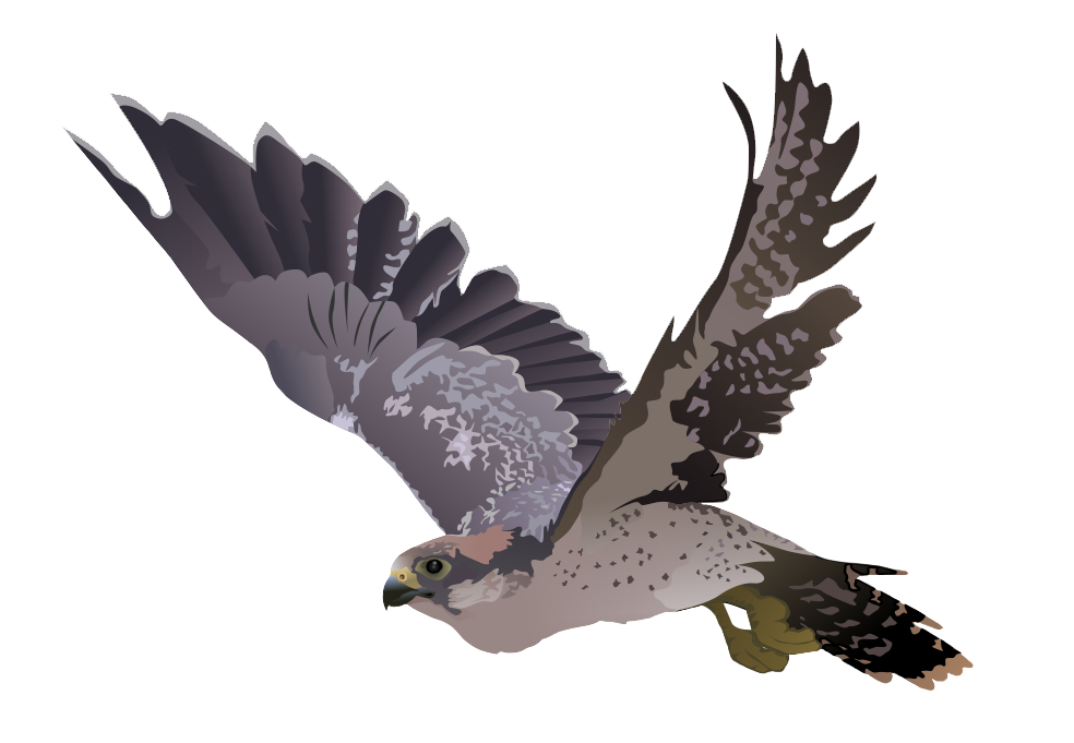 Falcon PNG - 12953