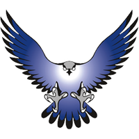 Falcon PNG - 12951
