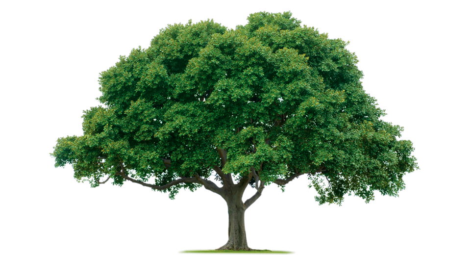 Family Reunion Tree PNG - 64796