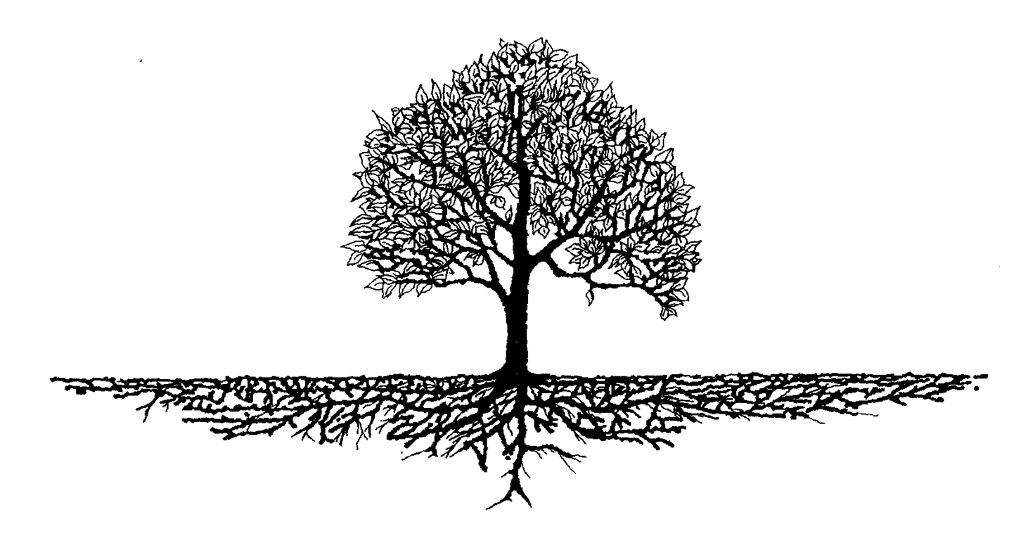 Family Reunion Tree Clipart 16 - Family Reunion Tree PNG