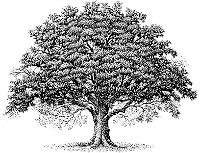 Welcome to the Brown-Butler-Bonds Family Reunion Web Site. - Family Reunion Tree PNG