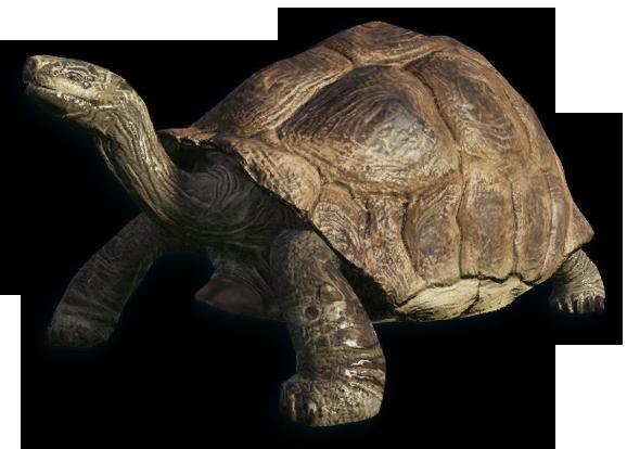 Tortoise PNG - 7219