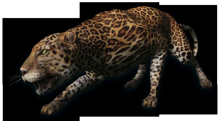 Leopard PNG - 6345