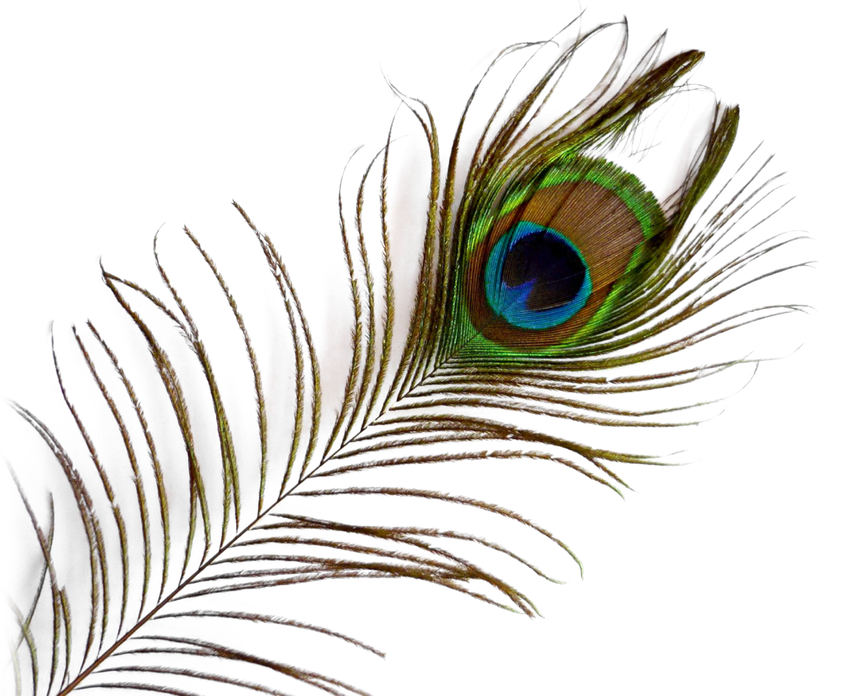 Feather HD PNG-PlusPNG.com-12