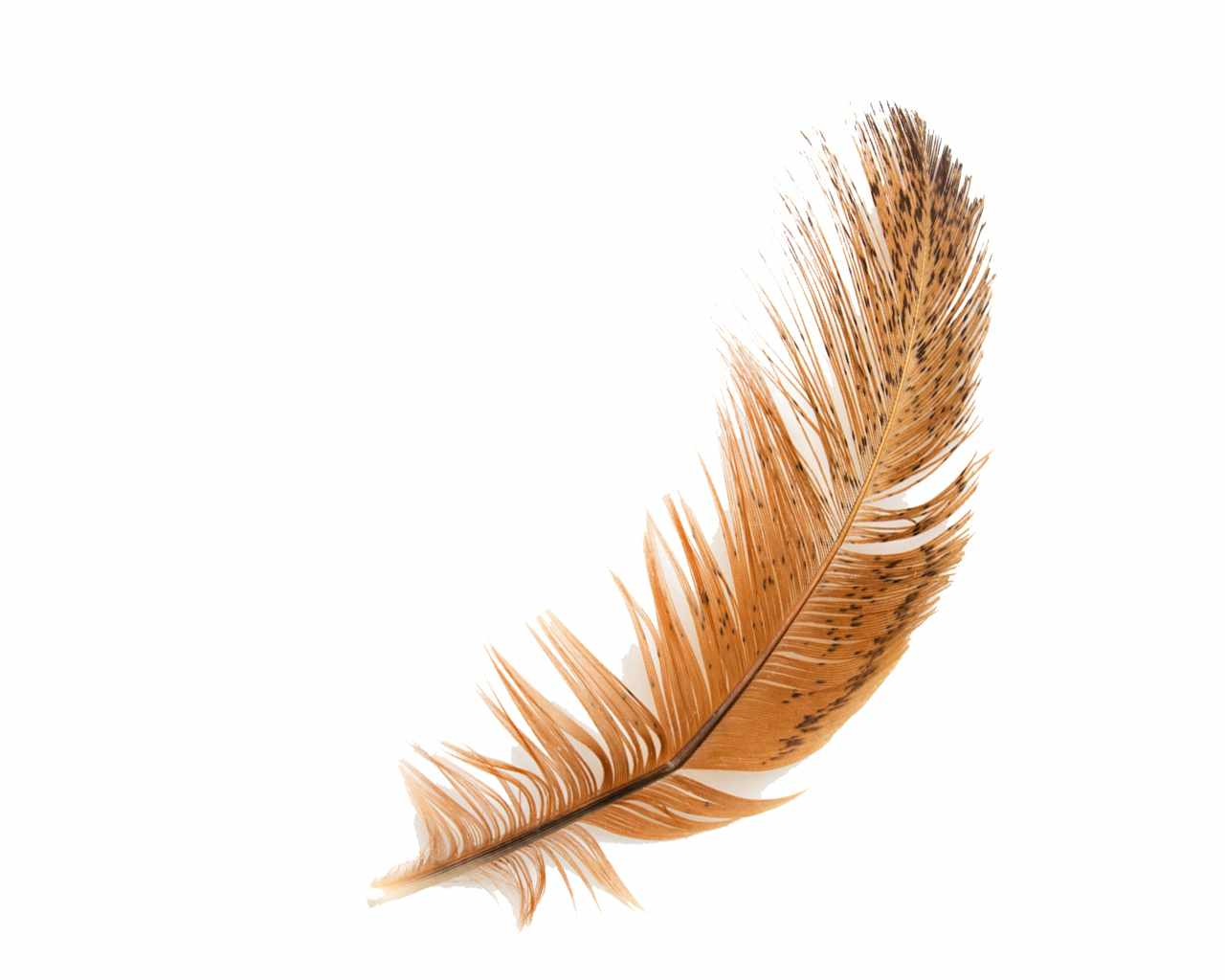 Feather HD PNG - 90477