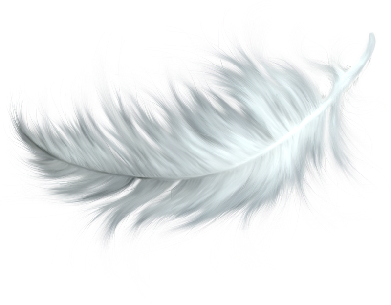 Peacock Feather PNG HD