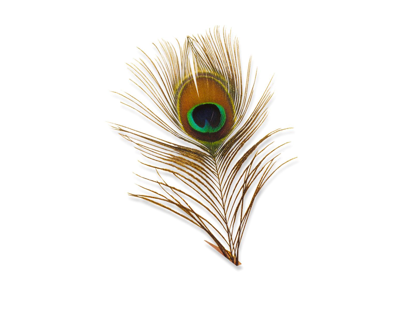 Feather HD PNG - 90466