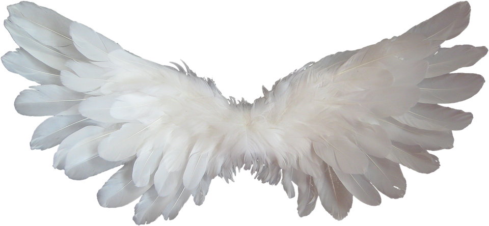 White, Angel, Wings, Feather,