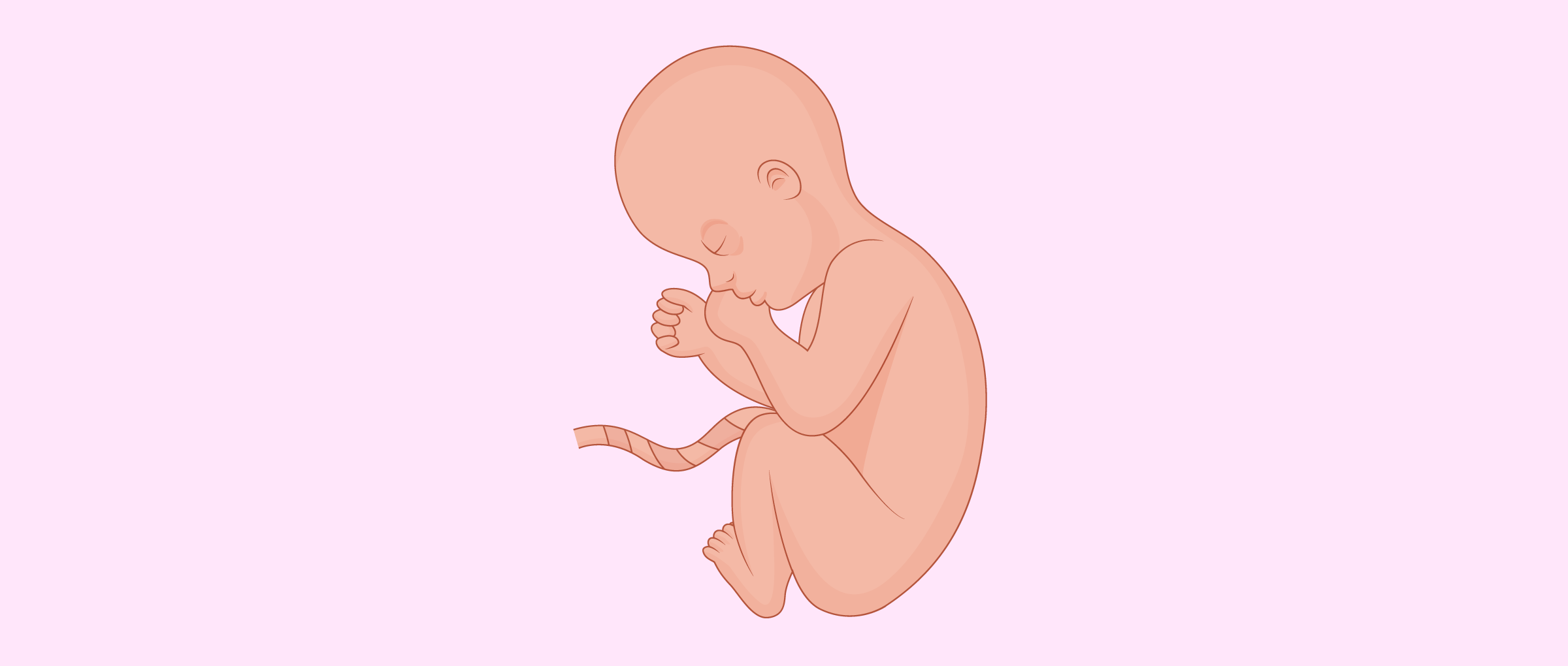 Baby position in 8th month of pregnancy - Fetal Position PNG