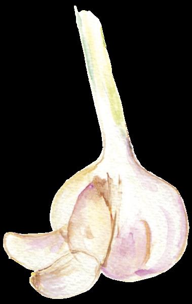 File:大蒜garlic.png - Garlic PNG