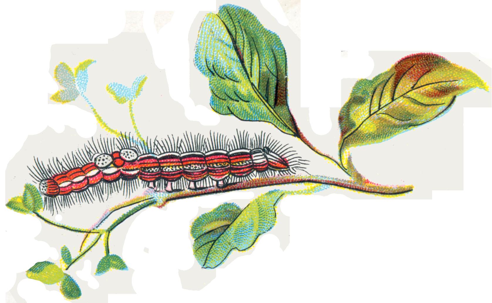 Caterpillar PNG - 1775