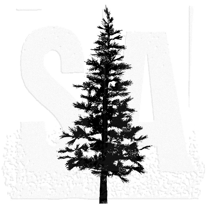 Fir Tree PNG Black And White-PlusPNG.com-800 - Fir Tree PNG Black And White