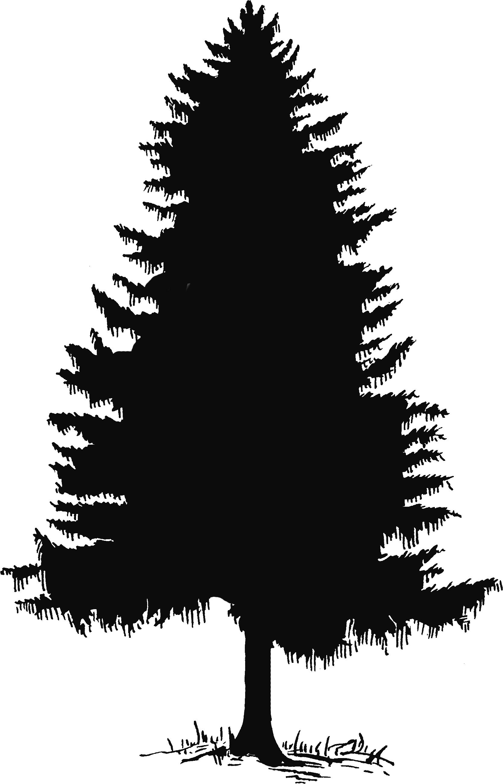 Douglas Fir Cliparts #2821947 - Fir Tree PNG Black And White