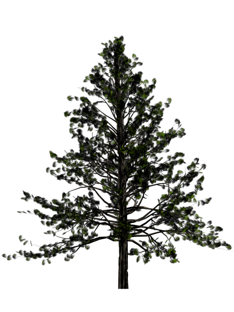 Download Fir-Tree PNG images transparent gallery. Advertisement - Fir Tree PNG Black And White