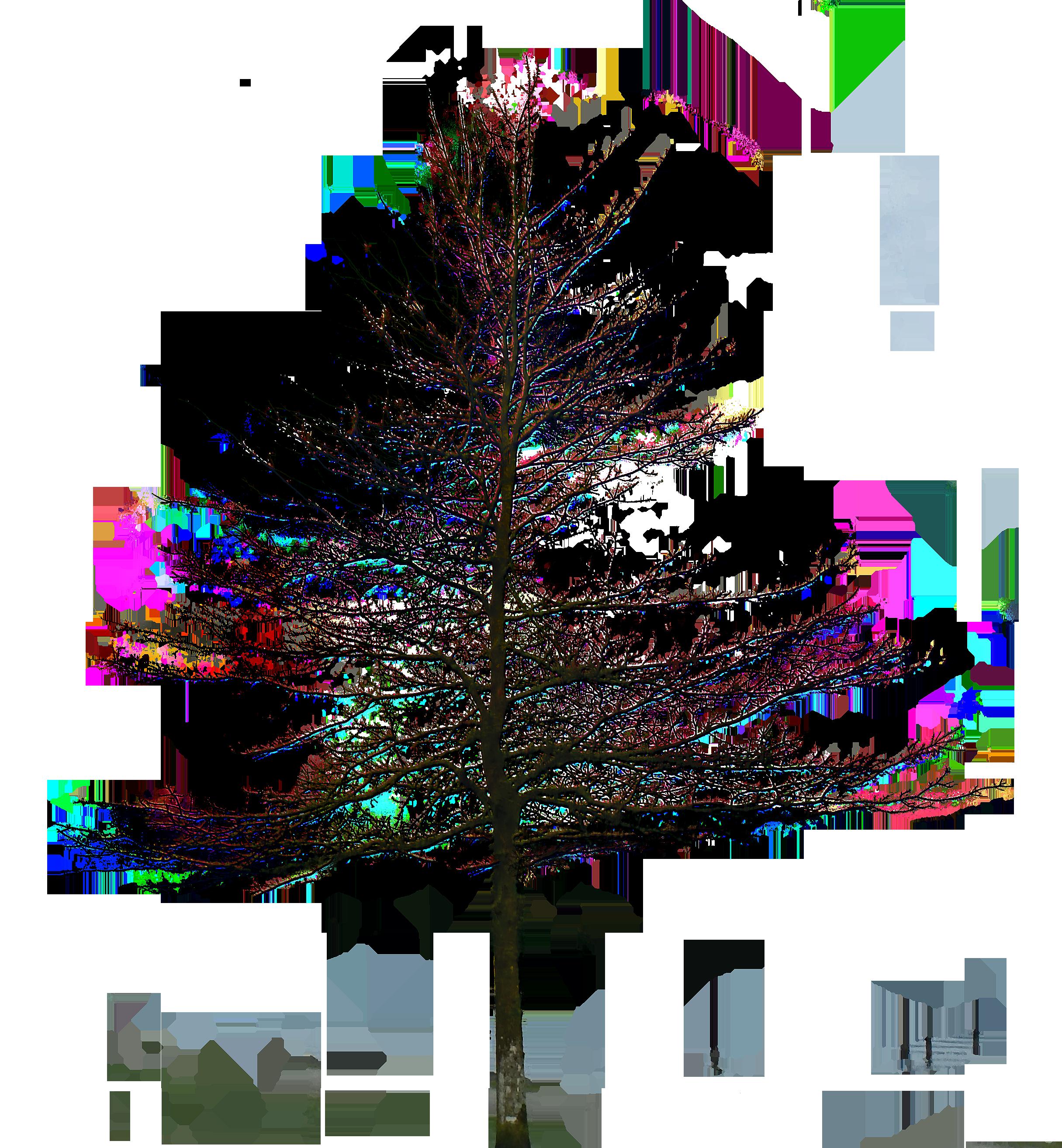 oak tree - Fir Tree PNG Black And White