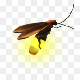 A firefly - Firefly PNG